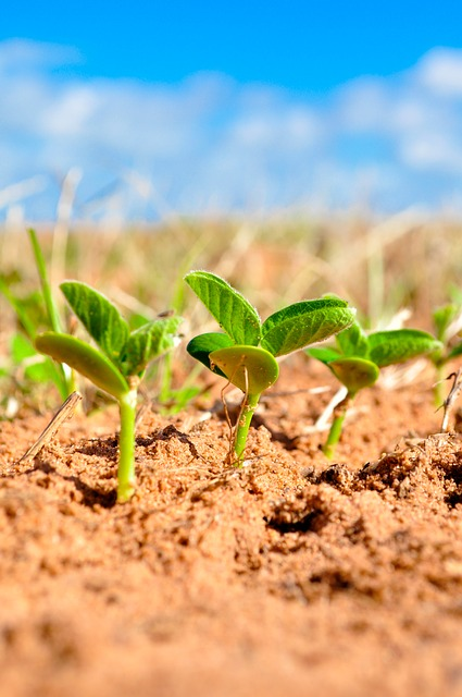 soybean information