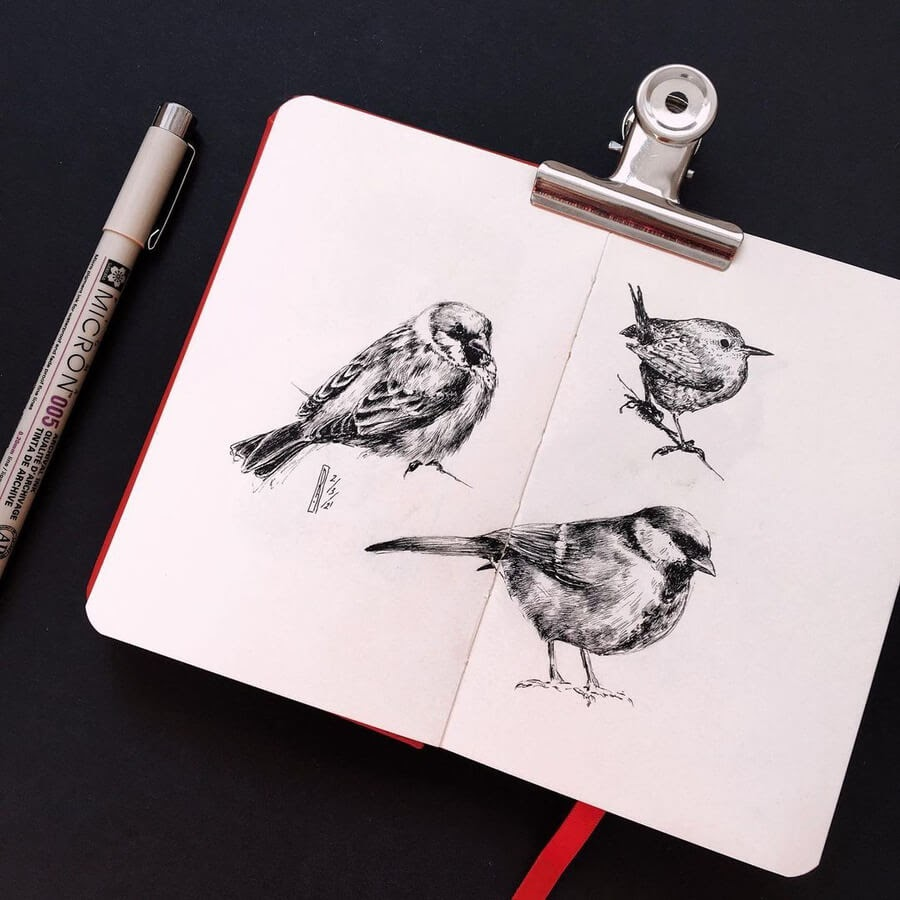 06-Bird-study-Ruzanna-www-designstack-co