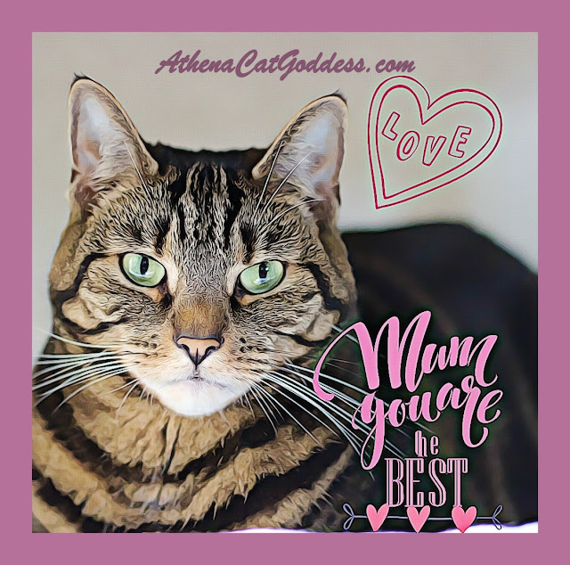 tabby cat Mother's Day card