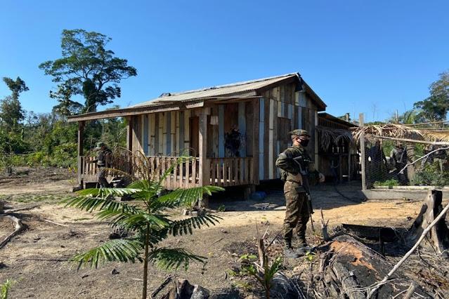 Operação contra desmatamento realizada em florestas nacionais de Rondônia
