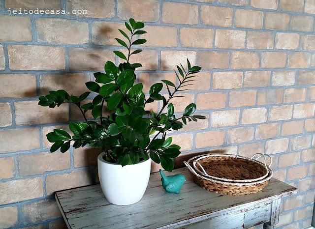 planta-zamioculca-dica-de-plantas
