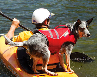 Australian-Cattle-Dog-Ruffwear-K9-Float-Coat