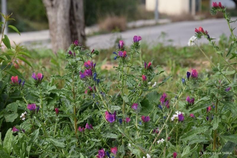 flores silvestres rosa y azul