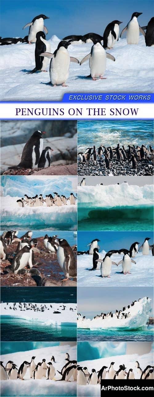 تحميل 10 صور عالية الجودة للبطاريق على الثلج