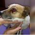 Agrede a un perrito con sus tacones y hace que el can pierda el ojo