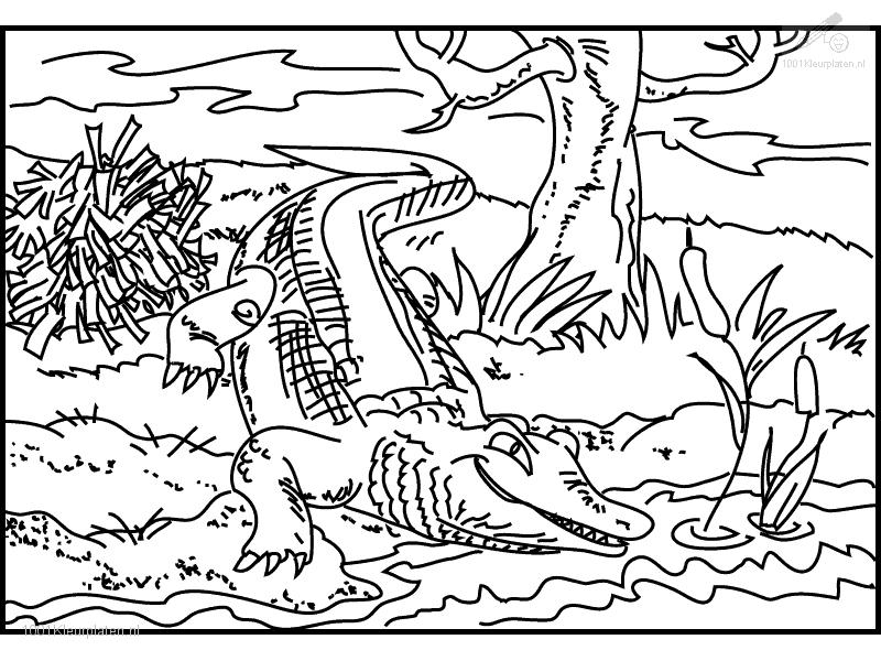 coloring pages of crocodiles | 2011-12-25