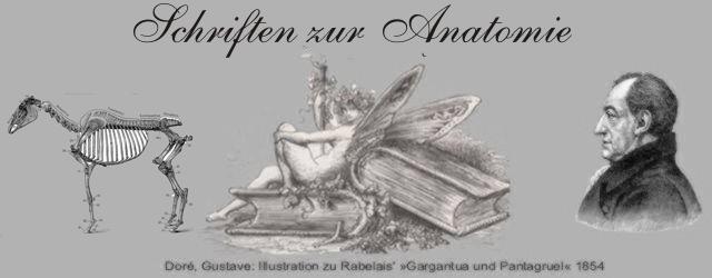 Schriften zur Anatomie