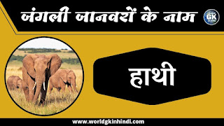 Elephant animal name in hindi | Wild Animals Name In Hindi