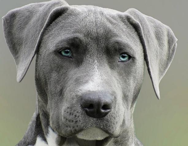 कुत्ते रात में अधिक भौकते है क्यों ?| कुत्ता ही जीभ से पानी क्यों पिता ही ? घोडा गाय जैसे जानवर क्यों नहीं पीते