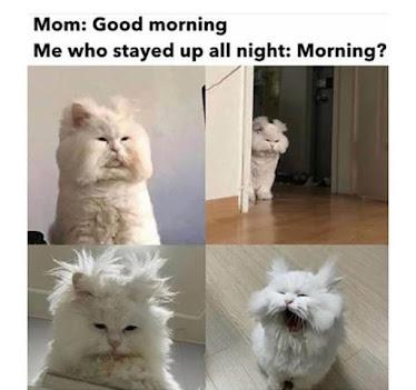 """""""good morning memes"""", """"cat memes"""", """"dank memes"""""""
