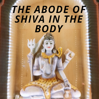 The abode of Shiva in the body image