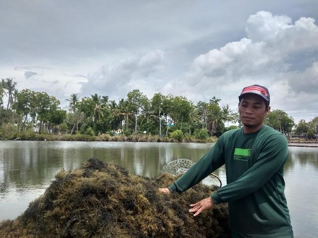 Ternyata Rumput Laut Sinjai Sudah Sampai ke China