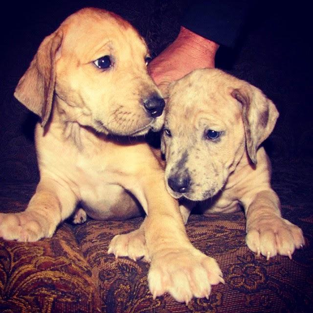 Sasha Pieterse's Dogs