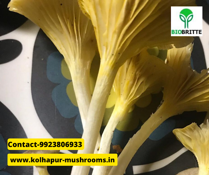 Mushroom supply in Pune | mushroom business | mushroom training | mushroom cultivation | organic mushrooms | mushroom products | fresh & dry mushrooms
