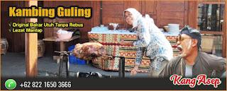 Jual Kambing Guling Lembang., kambing guling lembang, kambing guling,