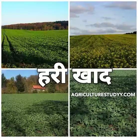हरी खाद क्या है इसके लाभ, उपयोग व फसलें