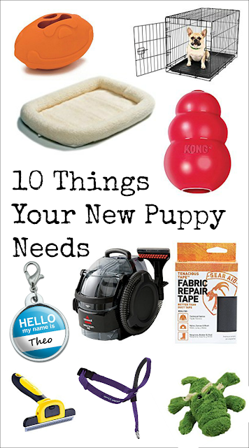 Must-have Puppy Gear