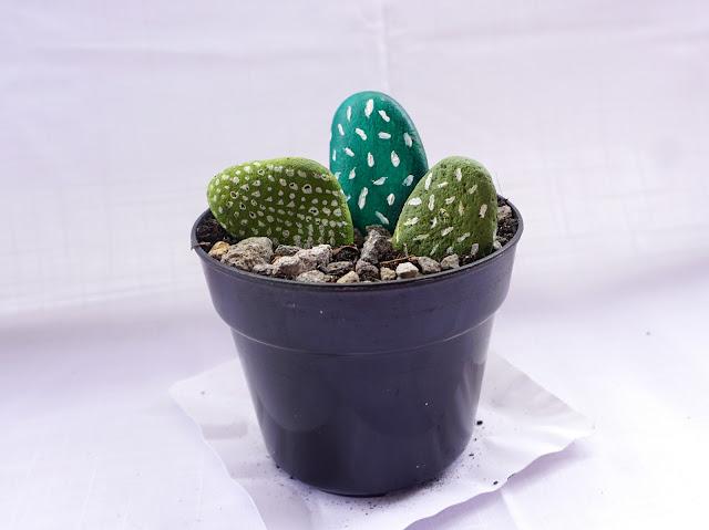 Tutorial Bikin Kaktus Dari Batu Luciaberta Com A Creative Lifestyle Blog