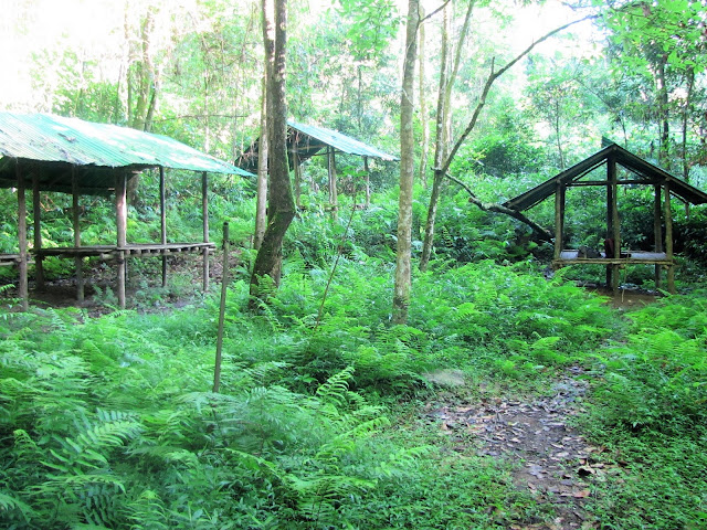jungle huts nam et phou louey national protected area laos