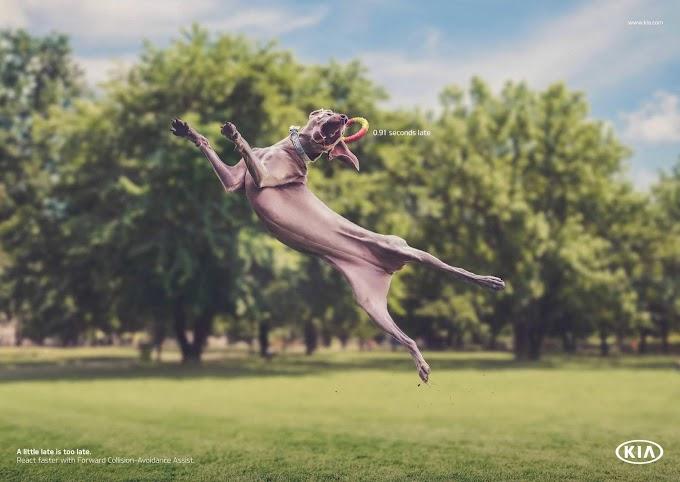 Perros con mal tiempo de reacción, la analogía de KIA para promocionar su asistente para evitar colisiones