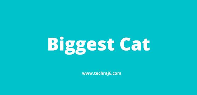 Biggest Cat