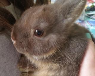 clover bunny 1