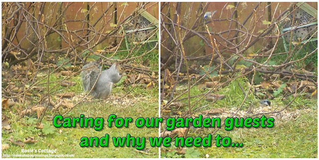 Caring for our garden guests and why we need to...