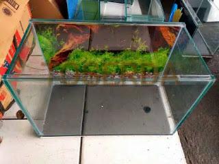aquarium-kaca-murah.jpg