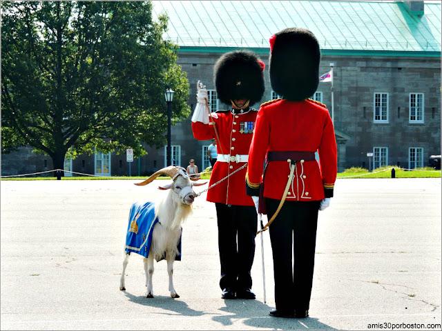 La Cabra Batisse de la Ciudadela de Quebec durante el Cambio de Guardia