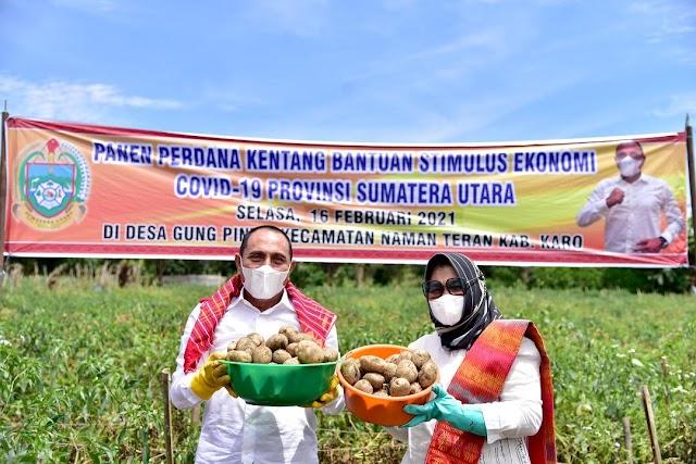Panen Kentang, Gubernur Dukung Hasil Pertanian Karo Jadi Industri Makanan Olahan