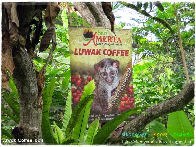 Educational Visit to Luwak Coffee Plantation, Bali ...