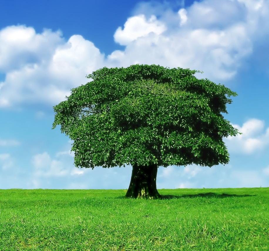 Jejak Pena Monica Anggen: Pohon yang Hidup Ribuan Tahun