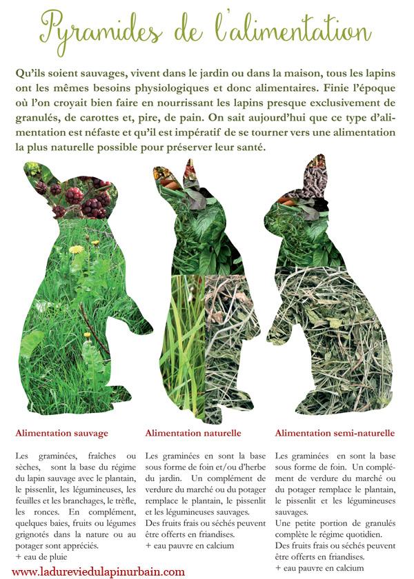 pyramide de l'alimentation du lapin
