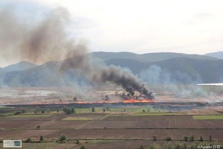 Ποτέ πια εγκληματικές  φωτιές στον καλαμιώνα της Πρέσπας την άνοιξη!