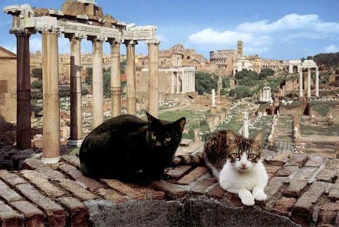 Chats à Rome