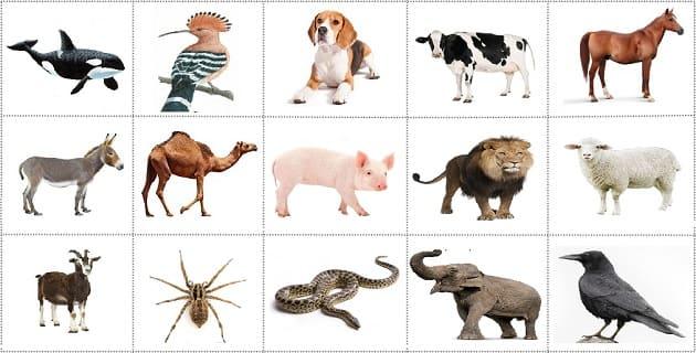 ما هي الحيوانات التي ورد ذكرها في القرآن الكريم ما هي سور القرآن التي سميت بأسماء حيوانات