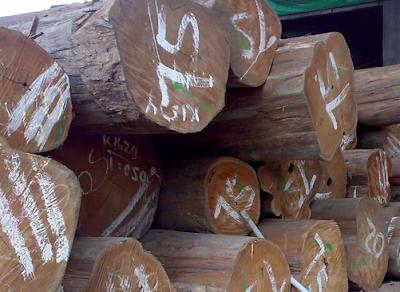 kayu jati perhutani (kayu jati TPK)