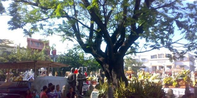 Inilah 6 Pohon Bersejarah yang menjadi Saksi Sejarah Umat Manusia