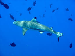 Watch Out for the Bad Impact of Eating Meat and Shark Fin - Healthy T1ps