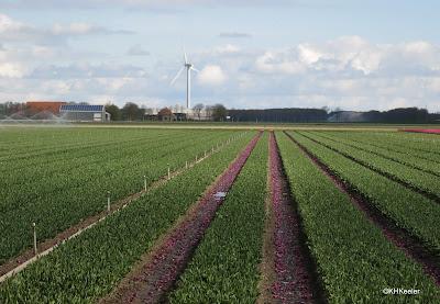 wind turbine in the Netherlands