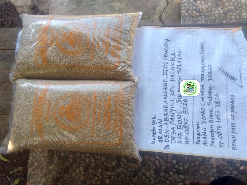 Benih Padi yang dibeli   ARMAN Bone, Sulawesi Selatan.   (Sebelum packing karung).
