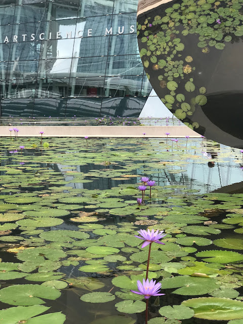 Lily Pond at ArtScience Museum