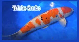 Taisho Sanke