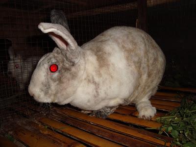 menjaga kesehatan kelinci