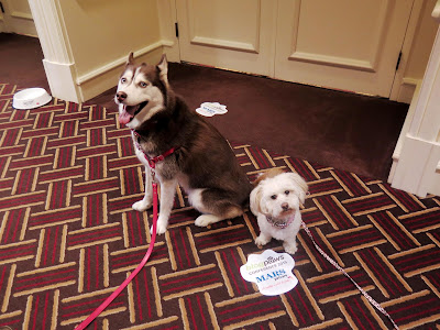 My dogs at the BlogPaws2015 blogger's conference in Nashville