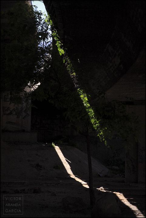 fotografia,sol,arbol,naturaleza,rayo,autovia,limites,serie,arte,murcia
