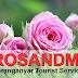 Rosandmi