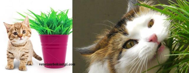 kediler-neden-ot-yer