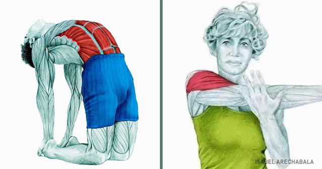 20 εικόνες που εξηγούν ποιοι μύες επηρεάζονται όταν τεντώνεστε