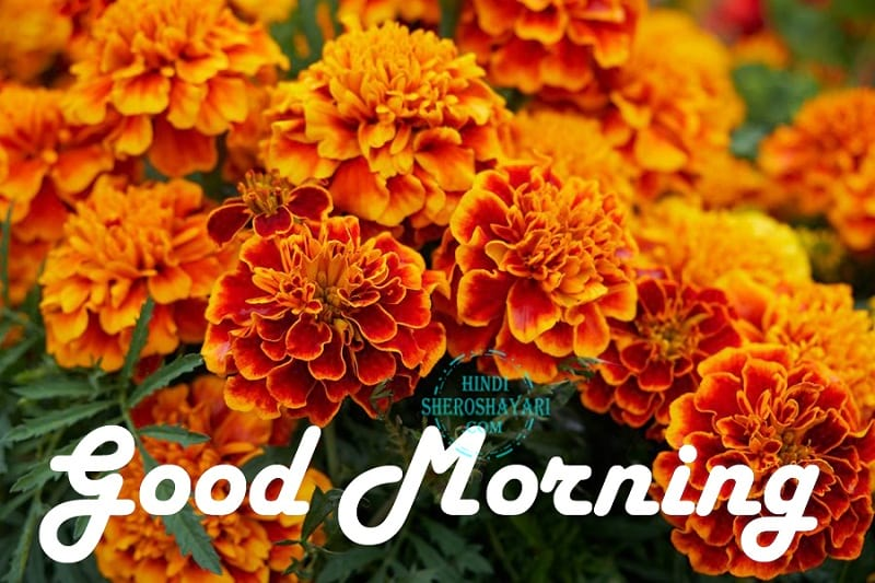 Good Morning Greetings With Marigold Flowers